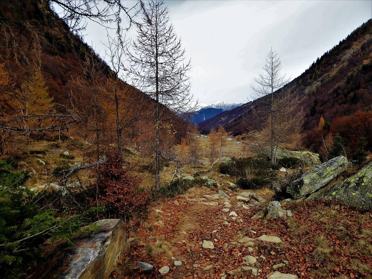 Valle Loana