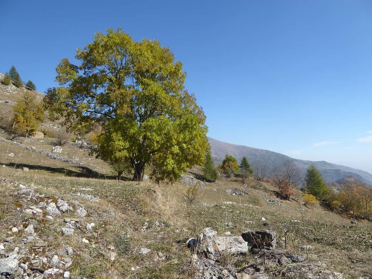 Trekking Monviso 6